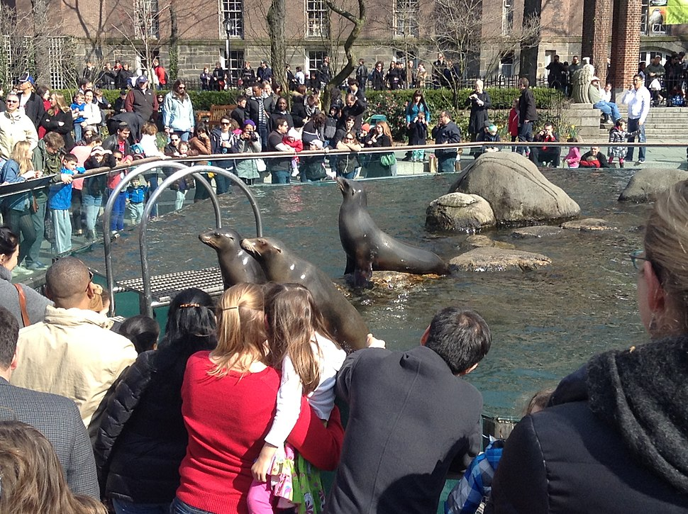 Sea lions entertaining crowd in Central Park Zoo, New York City 2