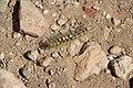 Sebkhet Dhreia 017.jpg