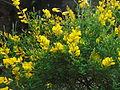 Sector de flores amarillas.JPG