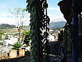 Sedum morganianum-plant-yercaud-salem-India.JPG