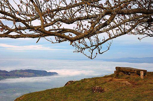 Seebodenalp-foggy Zuger See