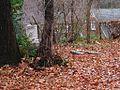 Shady Grove Cemetery Memphis TN 2012-12-09 009.jpg
