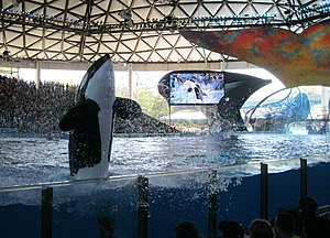 SeaWorld San Antonio - This is a picture of the Shamu show at SeaWorld San Antonio, taken on March 14, 2013.