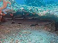 Shark nursery (10020635736).jpg