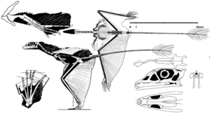 Sharovipteryx mirabilis David Peters