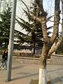 Shibei, Qingdao, Shandong, China - panoramio (210).jpg