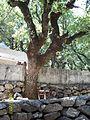Shik Ali Elhelwani forest (2).jpg
