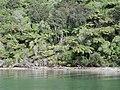 Shore in Mahau Sound.jpg