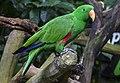 Singapore Zoo Parrot-1 (8346853143).jpg