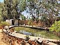 Siwa Oasis, Qesm Siwah, Matrouh Governorate, Egypt - panoramio (17).jpg