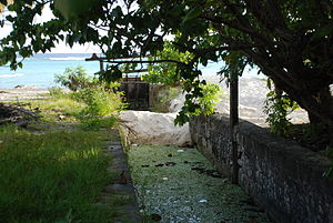 Graeme Hall Nature Sanctuary - The government channel and sluice - that has been deliberately closed and damned to stop the sea from replenishing the swamp.