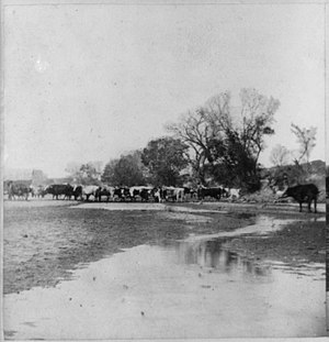 Smoky Hill River - Cattle crossing the Smoky Hill River at Ellsworth (photo by A. Gardner, 1867).
