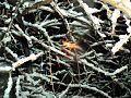 SnowingDay.jpg