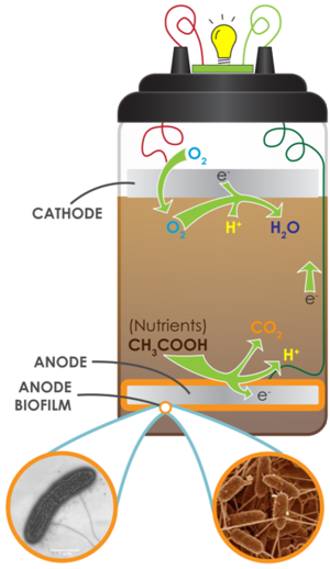 Microbial fuel cell - A soil-based MFC