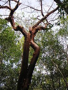Baum S Natural Foods Merriville
