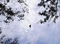 South Bay Botanic Garden, Palos Verdes Peninsula (8038129995).jpg