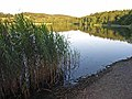 Southern end of Esthwaite Water - geograph.org.uk - 203367.jpg