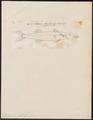 Sphyraena jello - 1700-1880 - Print - Iconographia Zoologica - Special Collections University of Amsterdam - UBA01 IZ13400147.tif