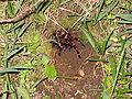 Spider monteverde.jpg