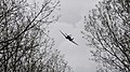 Spitfire Over Normandy (48108168328).jpg