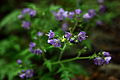 Spring-wildflowers-forest - West Virginia - ForestWander.jpg