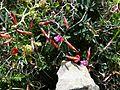Spring flowers antikithera.jpg