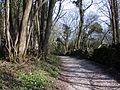 Spring in cragbank lancashire - panoramio.jpg