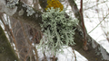 Spring lichens 05.png