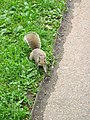 Squirrel-road.jpg