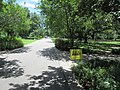 St Charles Avenue at Audubon Park New Orleans 11 June 2020 09.jpg