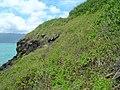 Starr-050419-0392-Lantana camara-habit-Mokolii-Oahu (24628225382).jpg