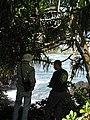 Starr-091104-0719-Pandanus tectorius-habit with Forest and Kamaui-Kahanu Gardens NTBG Kaeleku Hana-Maui (24894004601).jpg