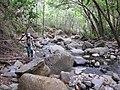 Starr-120425-4779-Syzygium cumini-habit with Kim and stream-Waikapu Valley-Maui (24512819763).jpg
