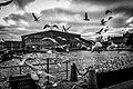 Stockholm Seagulls (179223871).jpeg