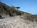 Stony beach and sandstone cliffs north of Garreg Fawr - geograph.org.uk - 757215.jpg