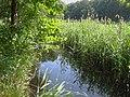 Stromgraben-Rostocker-Heide-26-06-2008-026b.jpg