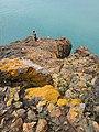 Sugli scogli di Punta Falcone.jpg