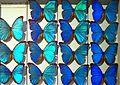 Sur le stand du Museum dans la Ville européenne des Sciences (Grand Palais Paris) (3030803635).jpg