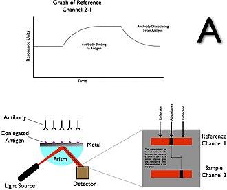 Surface plasmon resonance - Surface Plasmon Resonance (SPR) Operations A