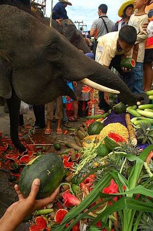 Surin Elephant Round-up - Elephant breakfast (usually held on the Friday morning).