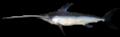 Swordfish-0026a.png