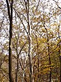 Sycamore PA250084 cave Trail.jpg