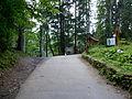 Synevyr Mizhhirskyi Zakarpatska-National park-before lake.jpg