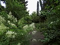 Syretsky arboretum 4.JPG
