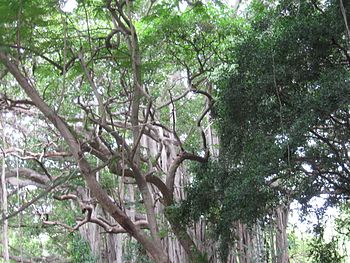 TREE VIEW 1.jpg