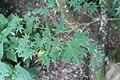 Terra Botanica 2017.08.23 Angers 117.jpg