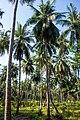 Thailand - Koh Phangan (25079660906).jpg