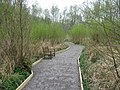 The Easy access Nature Trail in Stodmarsh Nature Reserve - geograph.org.uk - 1251050.jpg