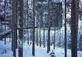 The Mirrorcube, Treehotel in Harads, Sweden 2 - Jan 3, 2019.jpg