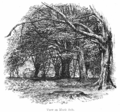 The New Forest its history and its scenery - page 158.png